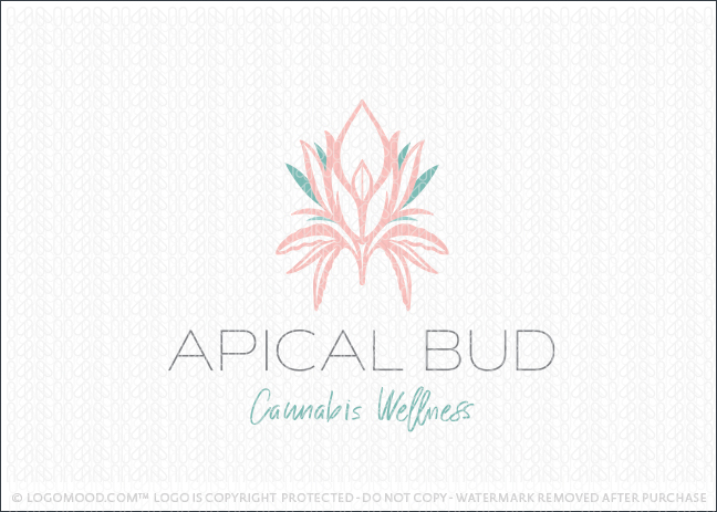 Apical Bud Cannabis
